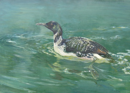 Charles Walter Simpson, Great Northern Diver