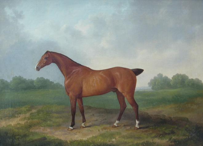Race Horse (I of II)